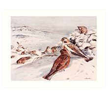 Winter Scene with Snow Buntings Art Print