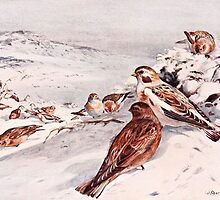 Winter Scene with Snow Buntings by goldenmenagerie