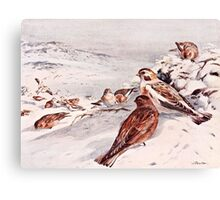 Winter Scene with Snow Buntings Canvas Print