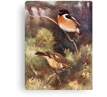 Pair of Stonechats Artwork Canvas Print