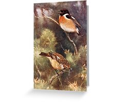 Pair of Stonechats Artwork Greeting Card