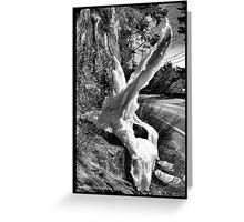 Mother Nature's Sculptures Greeting Card