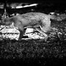 Reynard. A Foxes Tale. by Richard Hamilton-Veal