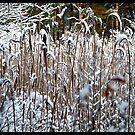 Vinter i Vättlefjäll by HELUA