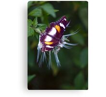 Wingspan - Common Eggfly Butterfly Canvas Print