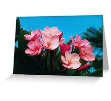Frangipanis. Greeting Card