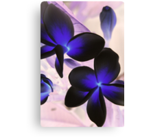 frangipanis in negative Canvas Print