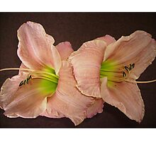 Two Peach Daylilies. Photographic Print