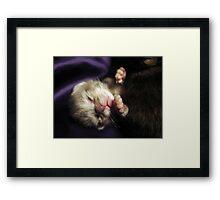 Brand New Baby Kitty Framed Print