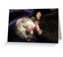 Brand New Baby Kitty Greeting Card
