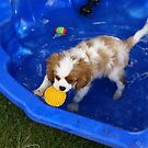 baby Louis's paddly pool by BronReid