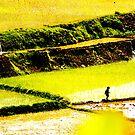 Boy in ricefield, Madagascar by GMNorway