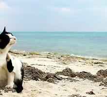Life's A Beach by J J  Everson