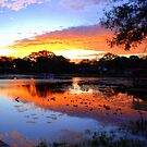 Sunrise on Lake Magdalene by Shelby  Stalnaker Bortone