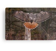 Red Tail Wingspan Metal Print
