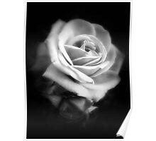 Pink Roses in Anzures 2 Dark Poster