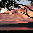 Sunset at St Helen's - Tasmania by Sheryle  Griffiths