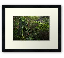 Rainforest Tropical North Queensland Framed Print