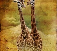 Giraffes by Dave Godden
