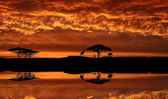 Out of Africa by Nathalie Chaput