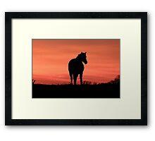 Horse at Sunset  Buckinghamshire  UK Framed Print