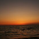Silhouette seagulls and swimmers by Ms.Serena Boedewig