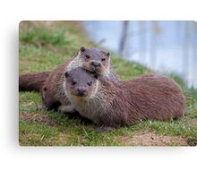 Otterly in Love (European Otters) Canvas Print