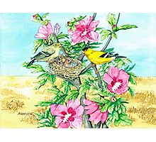 Goldfinch & Rose of Sharon Photographic Print