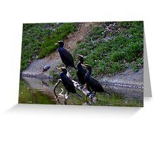 Cormorants group Greeting Card