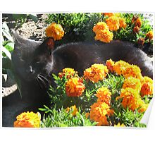 Bagheera in the Marigolds Poster