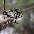 De-vinely Twisted! by Tracy Wazny