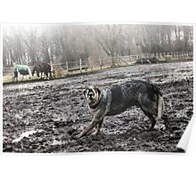 The vicious dog Poster