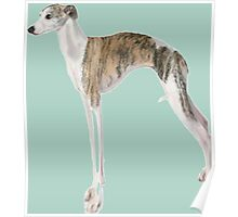 Tall Dog Whippet- Color Background Poster