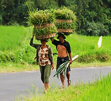 Balinese farmers carrying grass on their heads by Michael Brewer