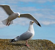 Do You Hear Wings Flapping? by Susie Peek