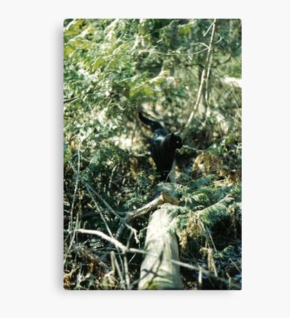 Panther in the Woods Canvas Print