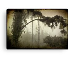 Spanish Moss Canvas Print