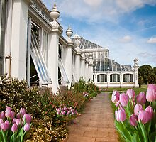 Pink Delight: Tulips Kew Gardens, London. by DonDavisUK