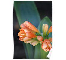 Color just waiting to explode, La Mirada, CA USA Spring 2010 Blooms, La Mirada, CA USA Poster