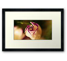 plump lizianthus spiralling open Framed Print
