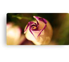plump lizianthus spiralling open Canvas Print