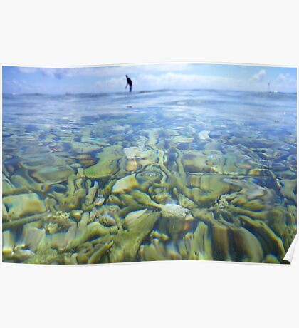 Coral Garden at Lady Elliot Island Poster