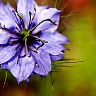 purple flower 2 by Gregory Peters