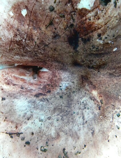 flesh #4 by butchart