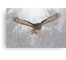 Great Gray Owl flying in snowstorm Canvas Print
