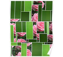 Pink Roses in Anzures 2 Art Rectangles 12 Poster