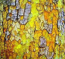 Yellow Bark by Dana Roper