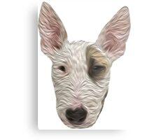 Bull Terrier II Metal Print
