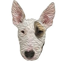 Bull Terrier II Photographic Print
