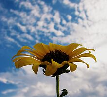 upstanding daisy by aminner